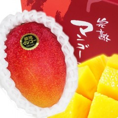 【 産地直送 】 熊本県産高級完熟 マンゴー 2玉化粧箱入り