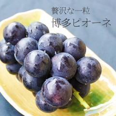 【 福岡県産 】 博多 ピオーネ 秀品 約1.6kg